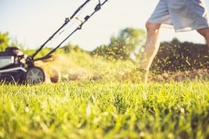 Summer is Here – Is There Danger Lurking in Your Lawn?