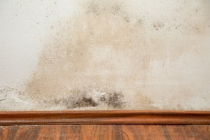 Delaware Health Agency Moves to a New Facility Because of Mold